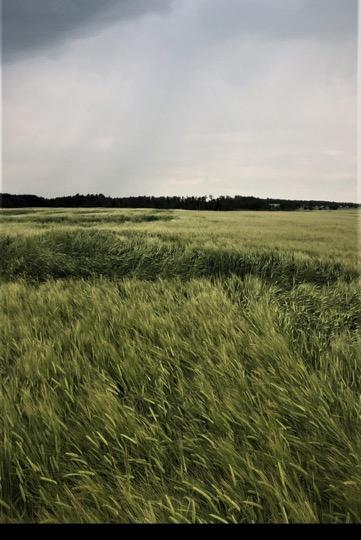 Ethrel Copeland barley